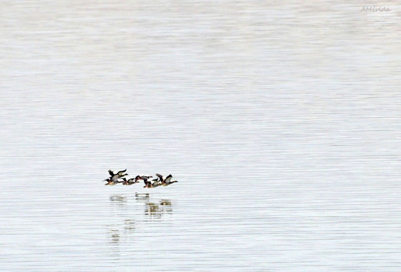 gansos del Nilo, paisajes